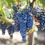 March 2019 Wines of France